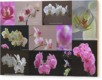 Orchid Fine Art Flower Photography Wood Print by Juergen Roth