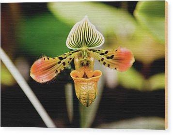 Orchid Flower Wood Print by Dan Pfeffer