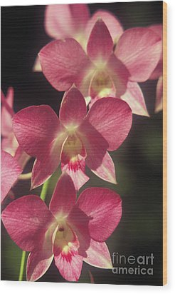 Orchid Flowers Wood Print by Kyle Rothenborg - Printscapes