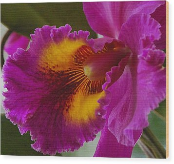 Wood Print featuring the photograph Orchid In The Wild by Debbie Karnes