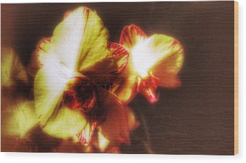 Wood Print featuring the photograph Orchid by Isabella F Abbie Shores FRSA
