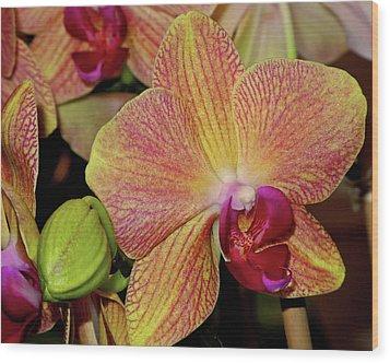 Orchid Wood Print by Lynda Lehmann