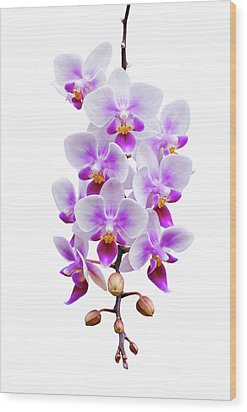 Orchid Wood Print by Meirion Matthias