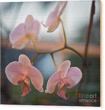 Orchid Menage Wood Print