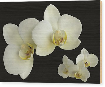 Orchid Montage Wood Print by Hazy Apple
