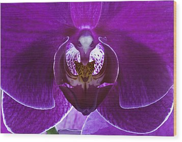 Orchid No. 1 Wood Print by Harry H Hicklin