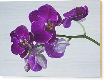 Orchid No. 2 Wood Print by Harry H Hicklin