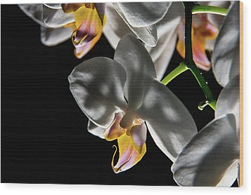 Orchid On Fire Wood Print
