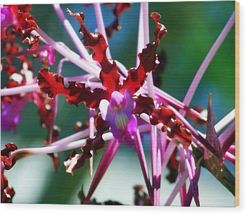 Orchid Spider Wood Print by Karen Wiles
