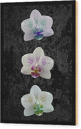 Orchid Trio Wood Print by Hazy Apple