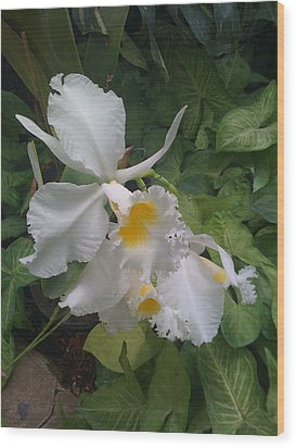 Wood Print featuring the photograph orchid VIII by Fanny Diaz
