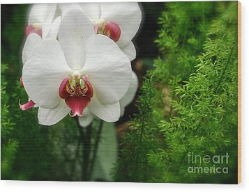 Orchid White Wood Print by Brian Jones