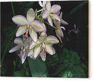 Orchidaceae Wood Print by Don  Wright