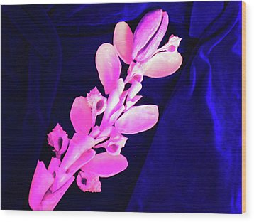 Orchidaceae Shell Wood Print by Arlin Jules
