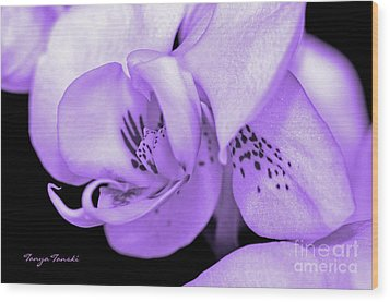 Orchid...orchid.... Wood Print