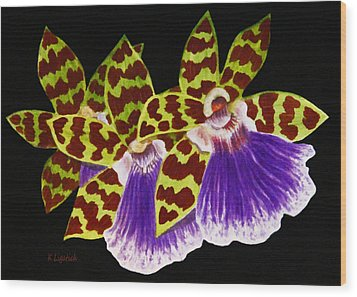 Wood Print featuring the painting Orchids - Jumping Jacks With Black Background by Kerri Ligatich