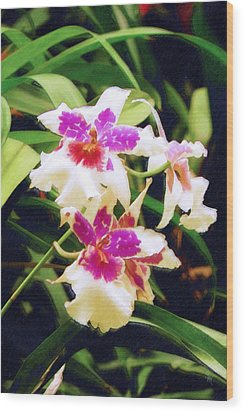 Wood Print featuring the painting Orchids 1 by Sandy MacGowan
