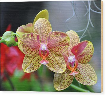 Orchids 35 Wood Print by Marty Koch