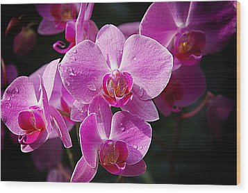 Orchids 4 Wood Print