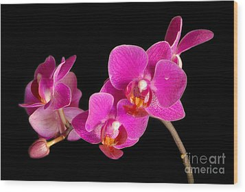 Wood Print featuring the photograph Orchids by Alana Ranney
