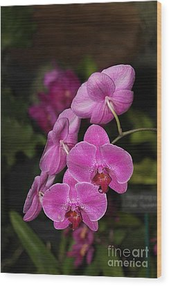 Orchids Alicia Wood Print by The Art of Alice Terrill