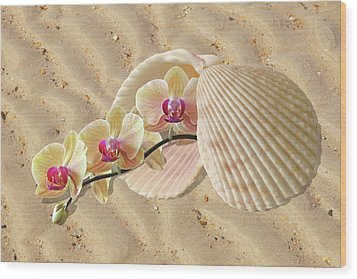 Orchids And Shells On The Beach Wood Print by Gill Billington