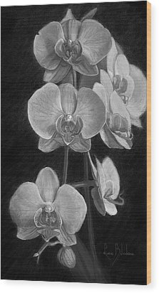 Orchids - Black And White Wood Print by Lucie Bilodeau