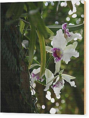 Orchids Wood Print by Deborah Molitoris