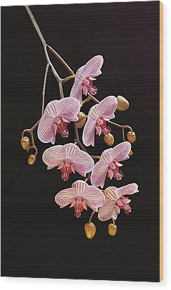 Orchids Galore Wood Print