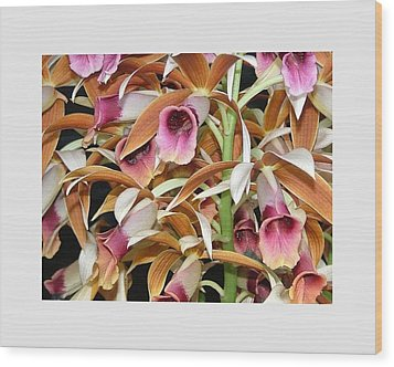 Orchids In Bloom Wood Print by Mindy Newman
