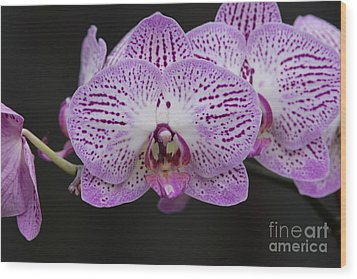 Orchids On Black Wood Print