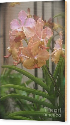 Wood Print featuring the photograph Orchids Peach by The Art of Alice Terrill