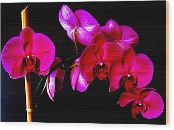 Orchids Wood Print by Ron Davidson