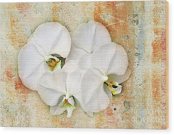 Orchids Upon The Rough Wood Print by Andee Design