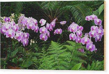 Orchids With Fern-panoramic Wood Print by Margie Avellino