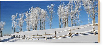 Ore Knob In Snow Panorama Wood Print by Alan Lenk