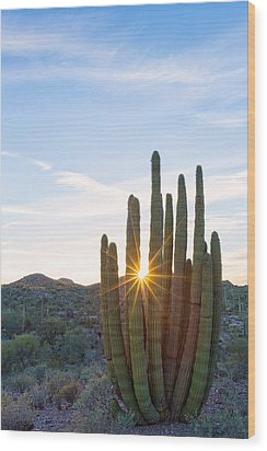 Wood Print featuring the photograph Organ Pipe Cactus by Patricia Davidson