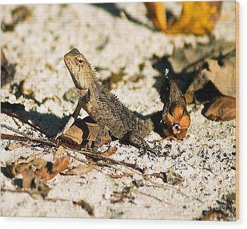 Oriental Garden Lizard A Dragon In The Maldives Wood Print by Chris Smith