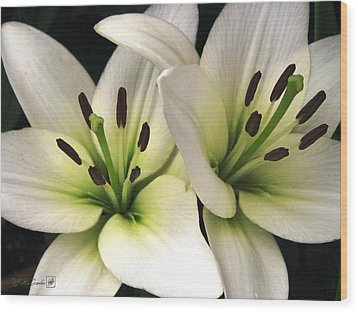 Oriental Lily Named Endless Love Wood Print by J McCombie