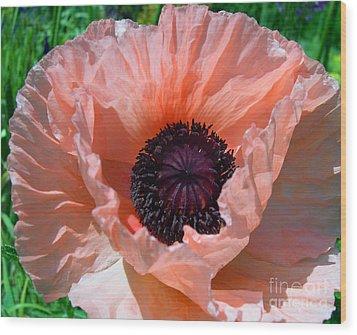 Oriental Poppy Wood Print by Addie Hocynec