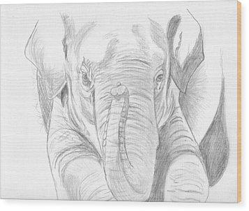 Original Pencil Sketch Elephant Wood Print by Shannon Ivins