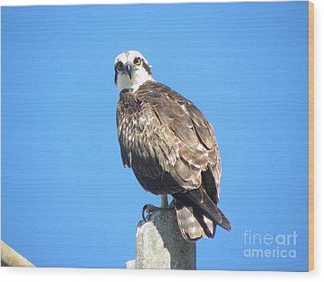 Osprey 1 Wood Print by Terri Mills