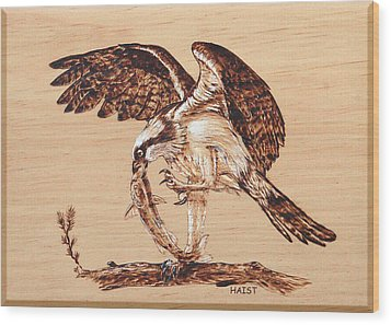 Osprey 3 Wood Print by Ron Haist