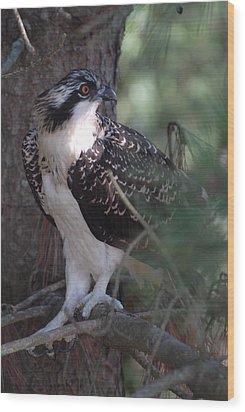 Osprey 40 Wood Print by Joyce StJames
