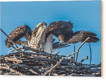 Osprey Alert Wood Print