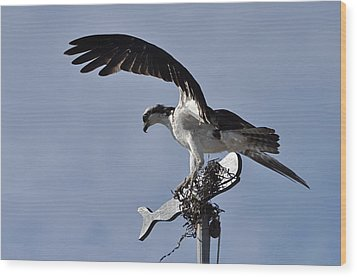 Osprey And Whale Wood Print by Gerald Hiam