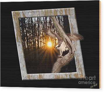 Osprey At Sunset  Black Wood Print by Donna Brown