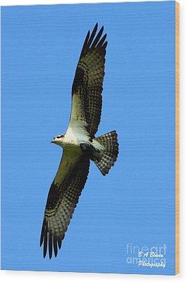 Osprey Carrying A Fish Wood Print by Barbara Bowen