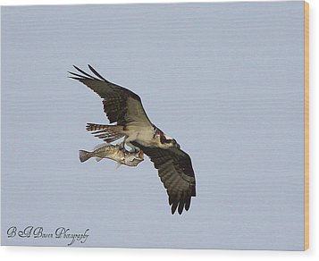 Wood Print featuring the photograph Osprey Catches A Fish by Barbara Bowen