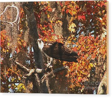 Osprey In Fall Wood Print by Theresa Willingham